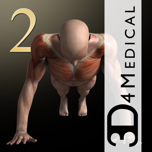 Health & Fitness - iMuscle 2 - 3D4Medical.com