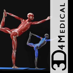 Health & Fitness - iYoga - Premium - 3D4Medical.com