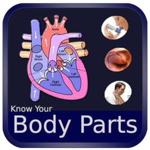 Health & Fitness - Body Parts and Functions - Egate IT Solutions Pvt Ltd
